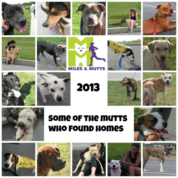 MilesMutts2013Review